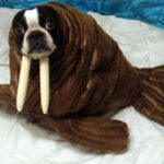 Walrus costume on dog