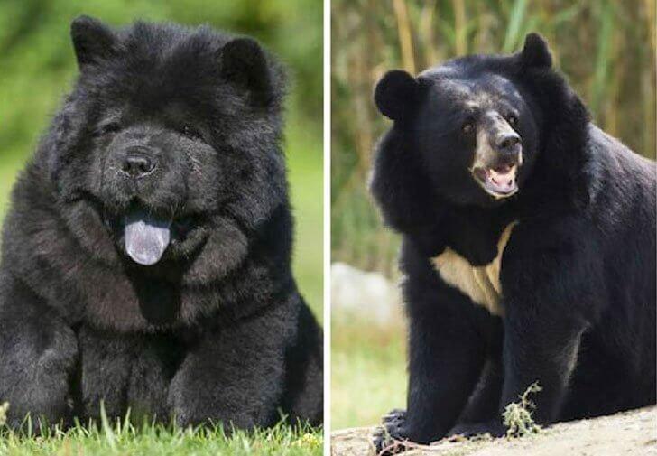 Sid vid sida jämföring mellan en liten valp och en stor björn